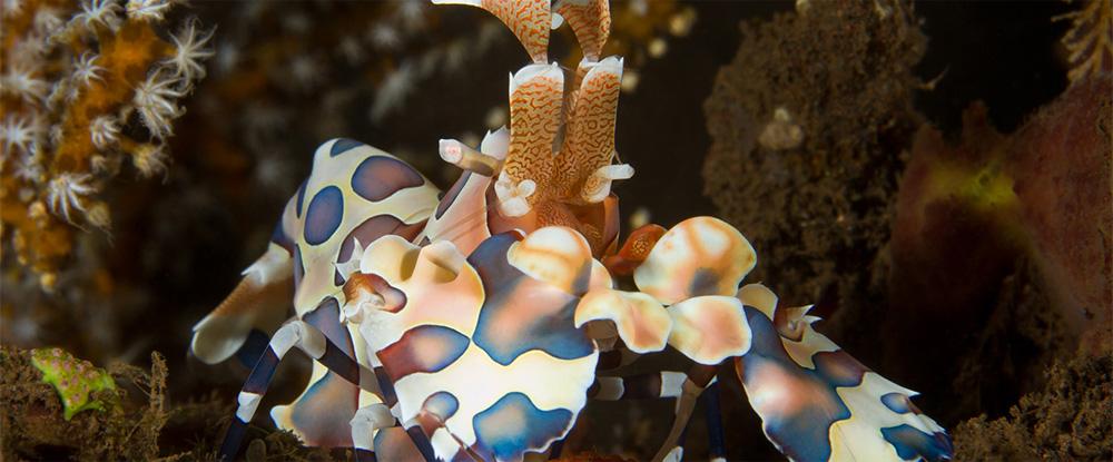 La Commission Environnement et Biologie vous accompagne dans une découverte du monde subaquatique